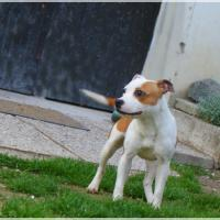 Lily Staffy's du grand nord