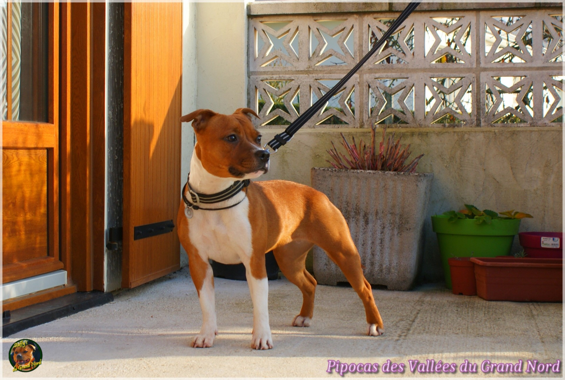Pipocas (Kalye)
