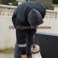 Lily 35j de gestation