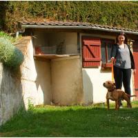 Boy staffordshire bull terrier