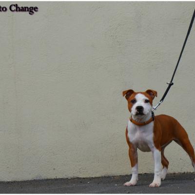 Sya courage to Change