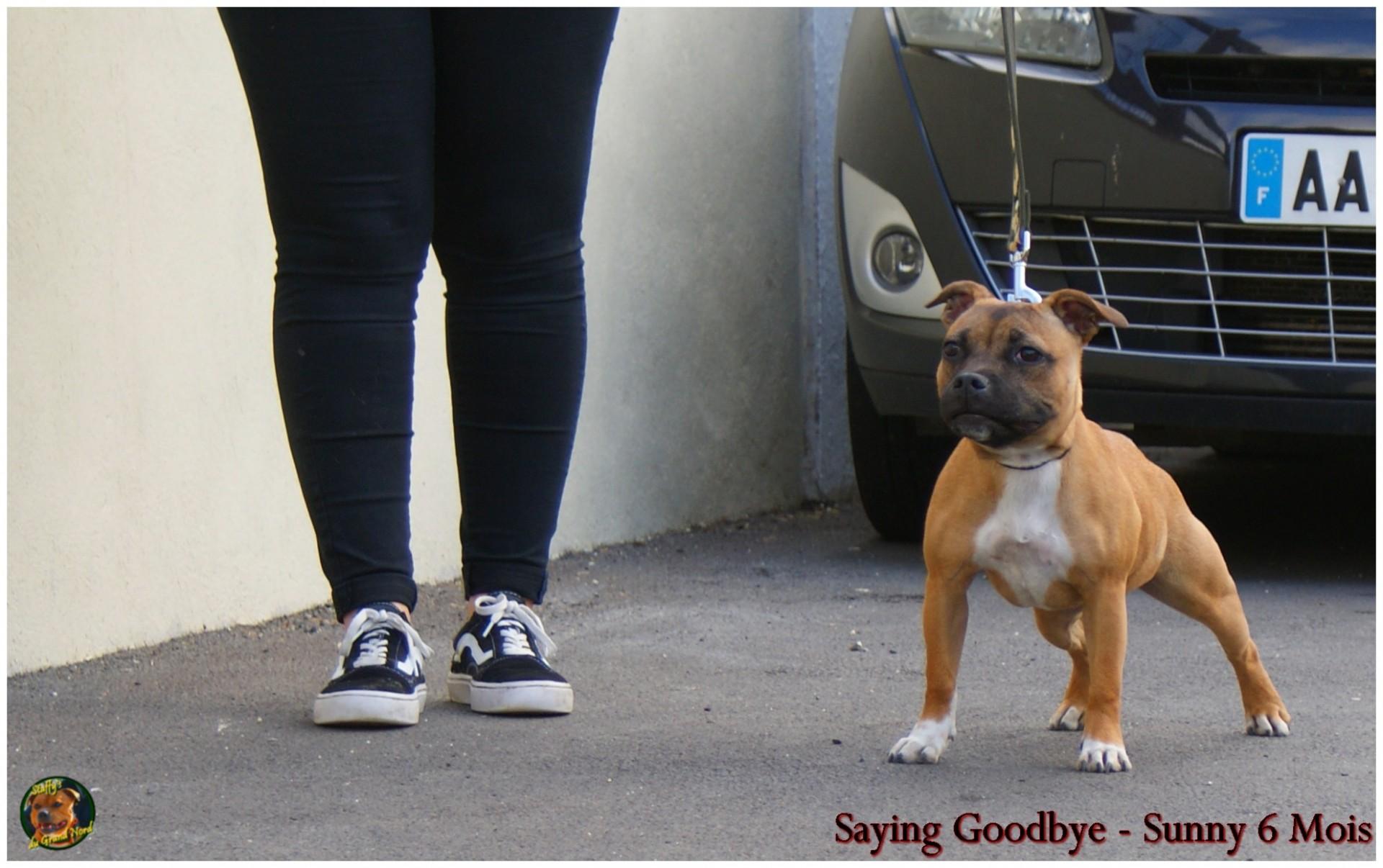 Saying Goddbye (Sunny)