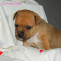 Oxmo Puccinette